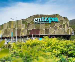pennag van rental - penang entopia (5)