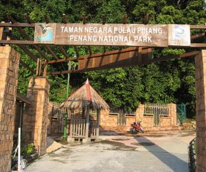 penang van rental - penang national park (7)