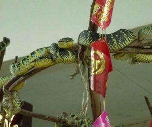 penang van rental - snake temple (6)